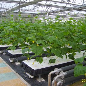 How to choose the proper type of greenhouse in your farming project