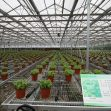 Why do commercial greenhouses become so popular today