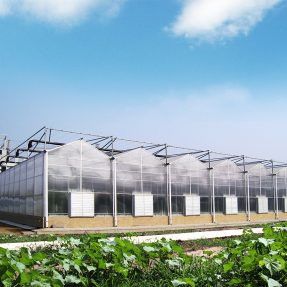 Solar greenhouse is very popular in agriculture today