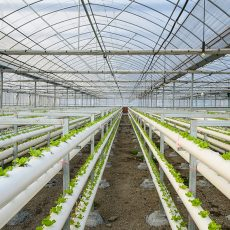 How to choose the right type of structural frames to be used in your greenhouse