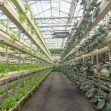 Agriculture greenhouse plays a vital role in China's farming today