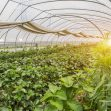 How to look at greenhouses' popular application today
